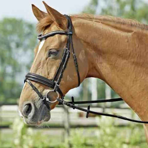 Busse-solibel Bridle COMFORT, black