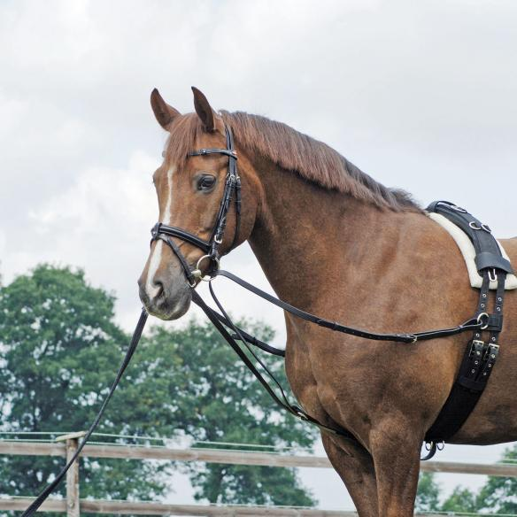 Busse Standing Draw-Rein